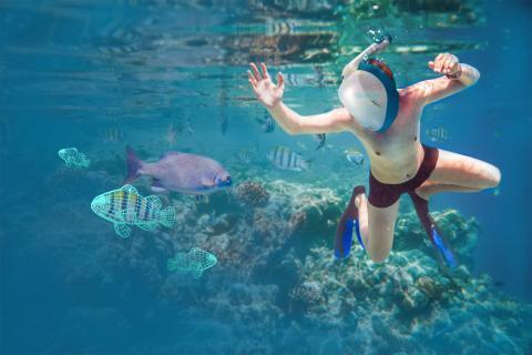 El mundo submarino desde tu piscina